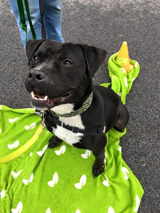 Lwd Presents Papi Our Adoptable Dog Of The Day Life With Dogs