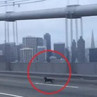 California Highway Patrol Rescues Frightened Dog From Bay Bridge