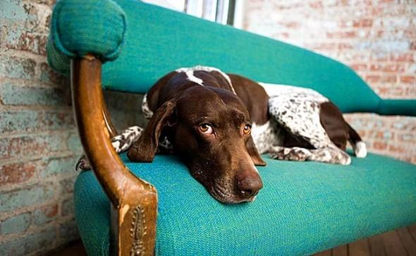4.30.16 - Missing Dog1