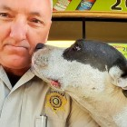 Deputy Rescues Lost Dog and Takes the Cutest Selfies