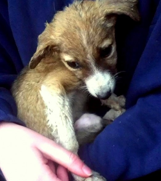 4.4.16 - Family Brings Home Puppy to Die With Love2