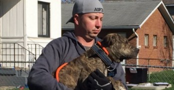 45 Dogs Rescued and 11 People Arrested in Ohio Dog Fighting Raids