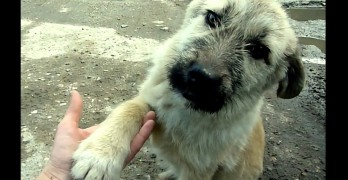 Super Appreciative Puppy Shakes His Rescuer's Hand