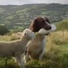 Dog and Lamb Best Friends Make for Adorable Odd-Couple