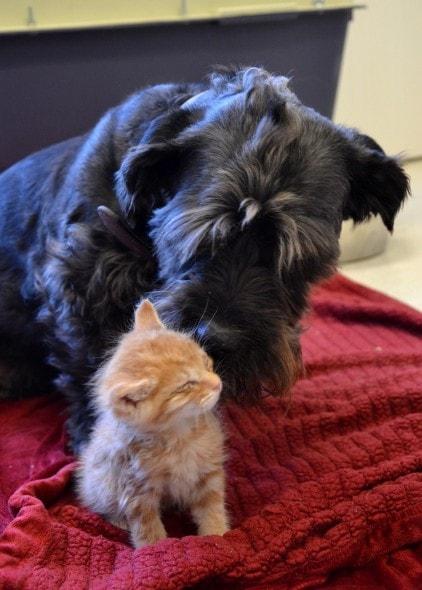 4.7.16 - Kittens2