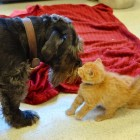 Dog Donates Blood to Abandoned Kittens Fighting for Their Lives