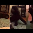 Dog Gets SO Excited for Bedtime, He Literally Runs to Bed!