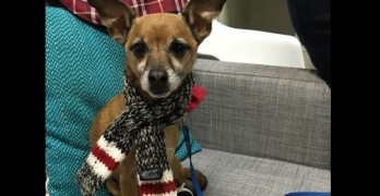Chihuahua Whose Human Died Gets Inmates as New Parents