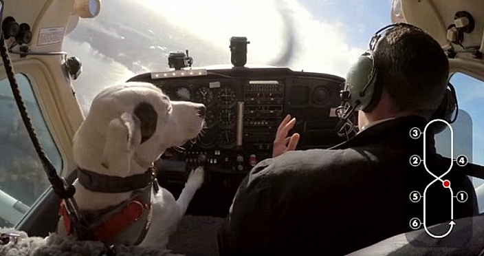 Rescue Dog Becomes the First to Ever Fly a Plane
