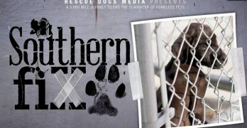 A Southern Fix: An Important Documentary for All Animal Advocates
