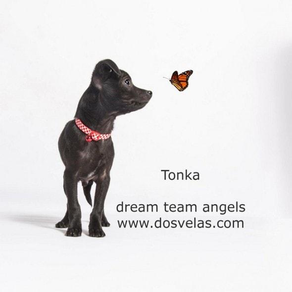 DTA Tonka