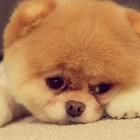 WARNING: Cute Overload