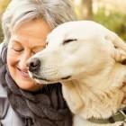 Vitamin D: Seniors Enjoy Health Benefits From Dog Ownership