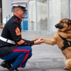 Wounded Warrior Dog To Receive Medal For Service