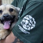 200 Saved From Horrific Dog Meat Farm in South Korea