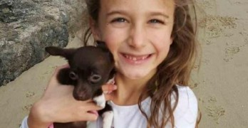 Was Dog Held Hostage? Alleged Thieves Accept Reward For Family Chihuahua