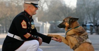 Lucca's Story: Video Showcases Military Dog's Service