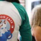 Caffeine & Canines! Peek Inside America's First Dog Cafe