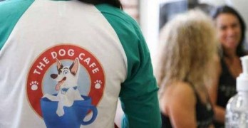 Caffeine & Canines! Peek Inside America's First Dog Cafe