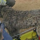 Utah Dog Falls Off Cliff, Lives to Bark About It