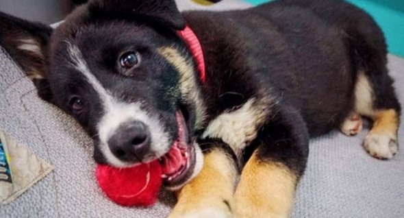 Three-month-old Biggie, a Border collie mix, was available for adoption at press time.