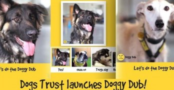 Dubsmash for Dogs! New App A Trendy Twist for Dog Lovers