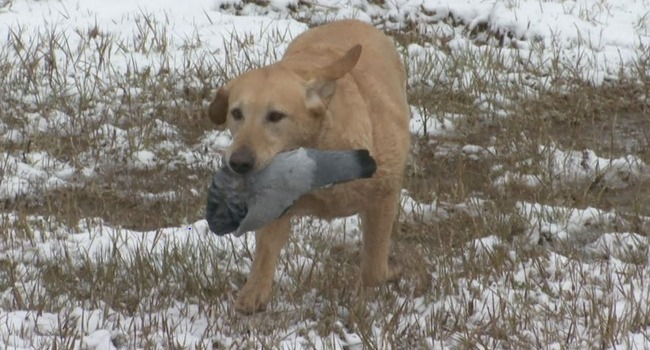 "Three-Legged Hunting Dog is ""All Heart, No Quit"""