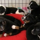 Litter of 10 Rescue Pups Named for Fallen Officers