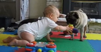 Pug Vs. Baby: An Epic Battle of Cuteness