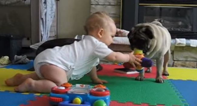 Pug Vs. Baby: An Epic Battle of Cuteness