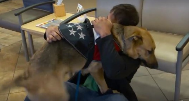 Touching Reunion: Marine Veteran Finds Missing Service Dog