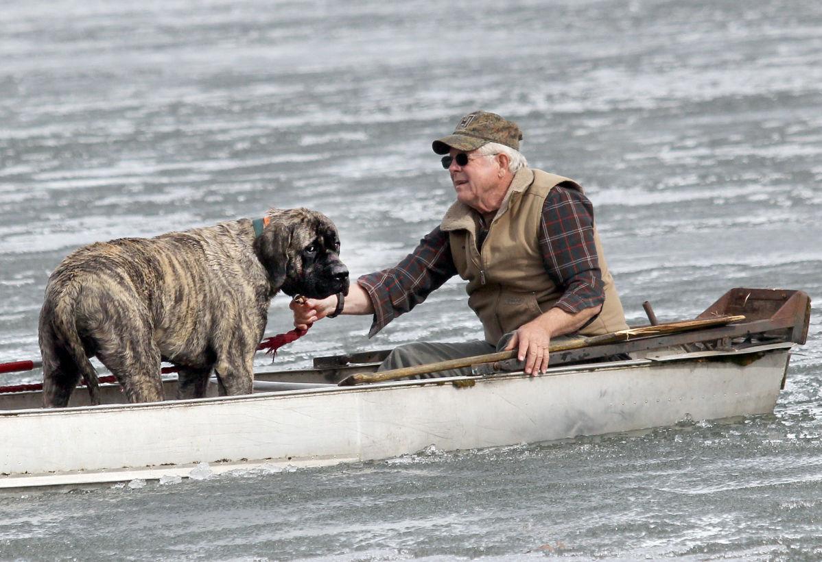 Frozen Mastiff! Dog Rescued After Falling Through Alaska ...