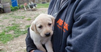 48 Dogs Seized in Wisconsin Puppy Mill Bust