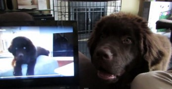 Puppy Brothers Video Chat