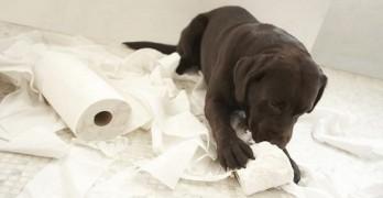 Toilet Paper Tell Tale Trail