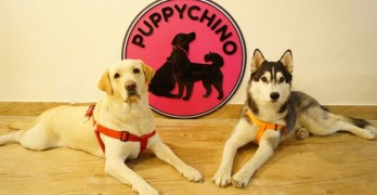 Puppychino: Delhi's First Doggie Cafe Opens for Business