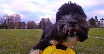 David Bark-ham?! U.K. Rescue Dog Has Mad Soccer Skills!