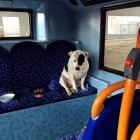 Heartbroken Dog Spends the Night Trembling on a Bus After Being Abandoned on It