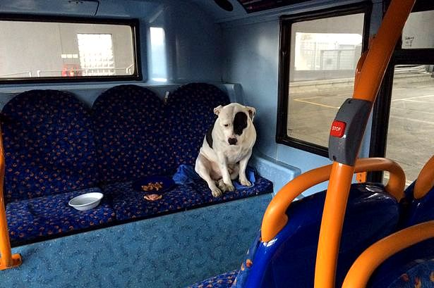 Heartbroken Dogs Spends the Night Trembling on a Bus After ...