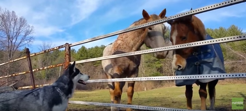 This Horse and Dog Are Best Mates for Life