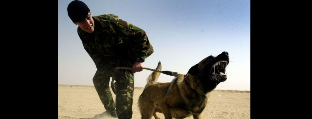 Hero Military Dog Mauls 2 ISIS Terrorists, Saves Platoon