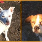 LWD Presents: Portia and Phoebe, Our Adoptable Dogs of the Day!