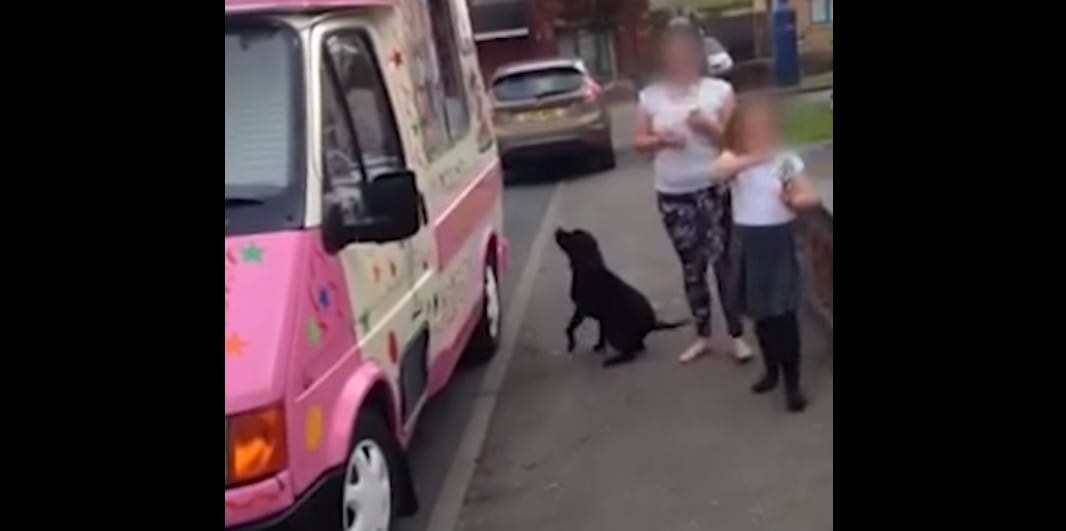 Well-Behaved Dog Waits in Line for Ice Cream Cone