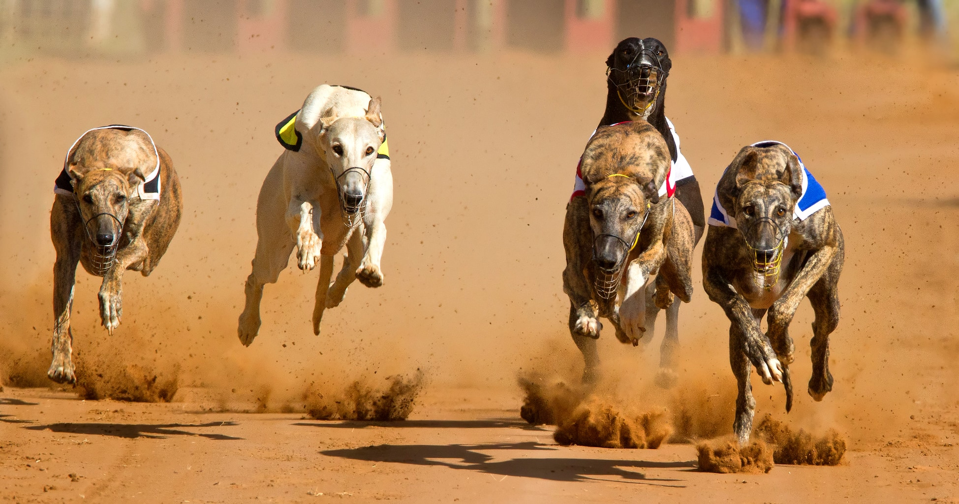 Arizona Shuts Down Greyhound Racing