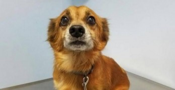 LWD Presents: Red, Our Adoptable Dog of the Day!