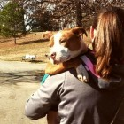 This Is What I've Learned While Fostering Pit Bulls
