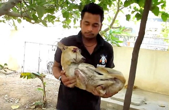5.19.16 - Dog with Massive Head Injury Saved in India2