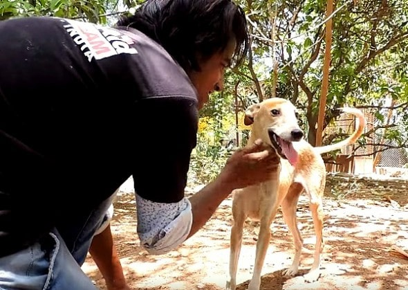 5.19.16 - Dog with Massive Head Injury Saved in India3