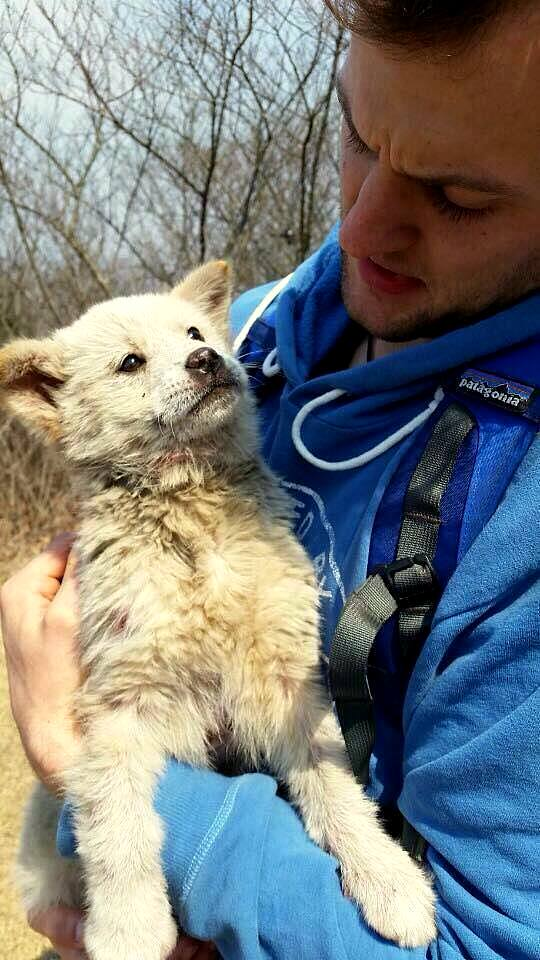 5.19.16 - Hiker Saves Puppy Escaped from Meat Farm1