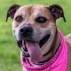 LWD Presents: Sasha, Our Adoptable Dog of the Day!